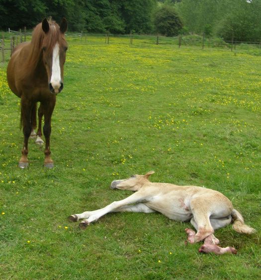 Kleurplaten Paarden En Pony En Veulens Idee 235 N Over