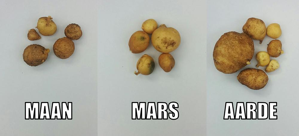 De oogst per pot. Foto: Reinier Vermeer.